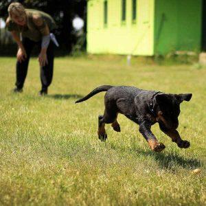 chien qui joue à va chercher la balle