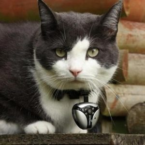 collier pour chat petcam eyenimal
