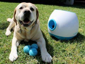 chien dans le gazon avec lanceur de balles iFetch