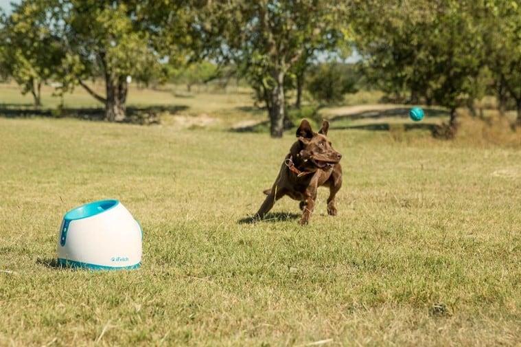 Ifetch too est un lanceur de balle pour chien automatique - Lanceur de balle pour chien automatique ...