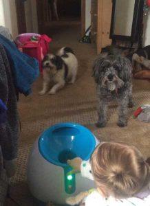 Le iFetch à l'intérieur et deux chiens