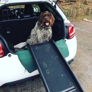 chien dans le coffre d'une voiture et rampe d'accès