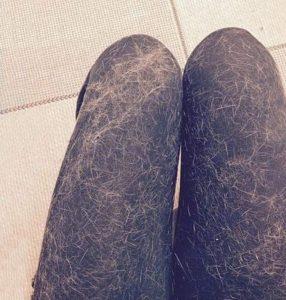 pantalon plein de poils de chat